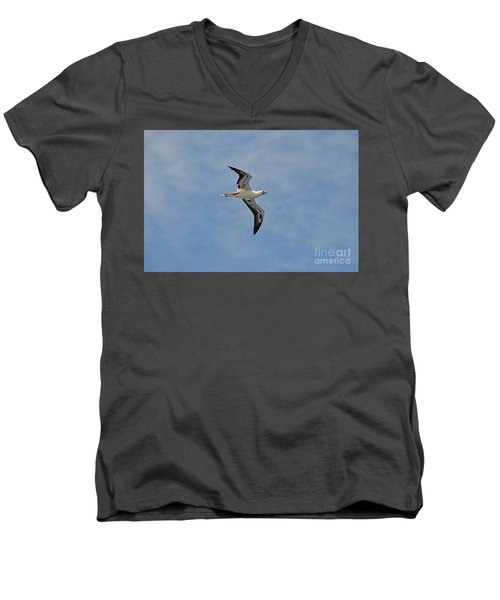 Red Footed Booby Bird 4 Men's V-Neck T-Shirt by Eva Kaufman