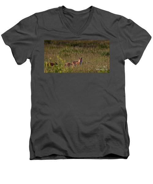 Red Fox Family Men's V-Neck T-Shirt
