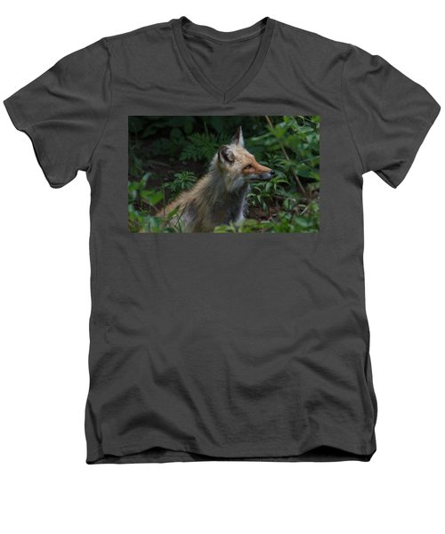 Red Fox In The Forest Men's V-Neck T-Shirt