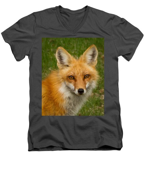 Red Fox Portrait Men's V-Neck T-Shirt