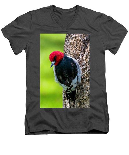 Red-headed Woodpecker Men's V-Neck T-Shirt
