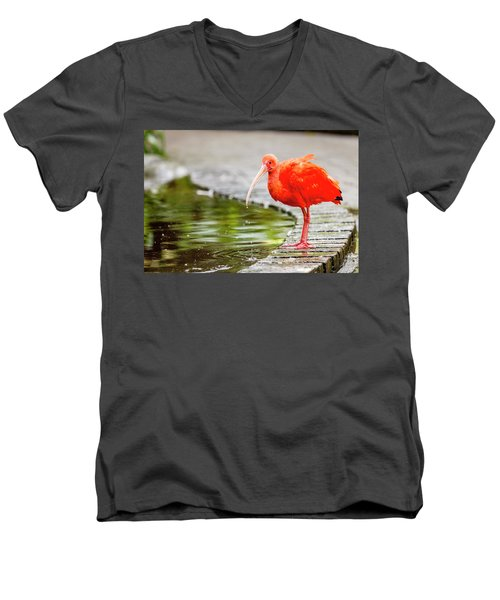 Men's V-Neck T-Shirt featuring the photograph Red Ibis by Alexey Stiop