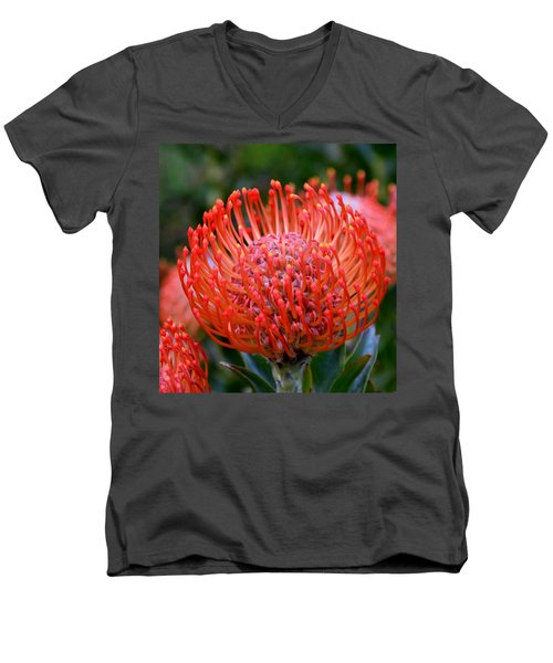 Red  Pincushion Protea Men's V-Neck T-Shirt by Werner Lehmann