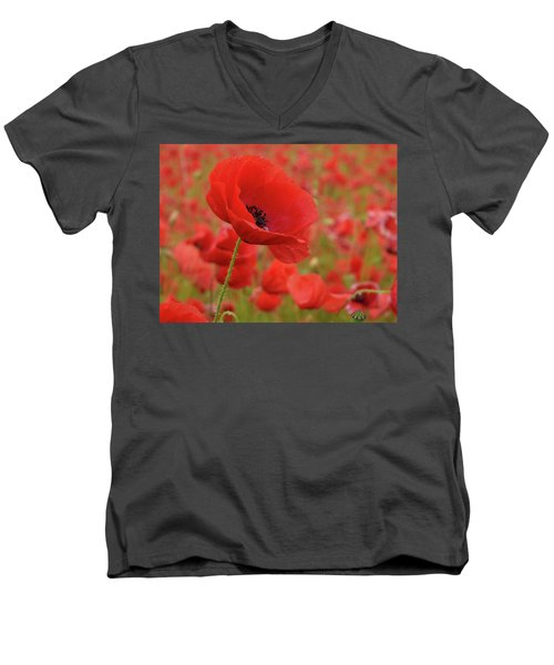 Red Poppies 3 Men's V-Neck T-Shirt