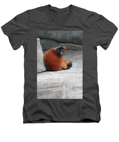 Red Ruffed Lemur Men's V-Neck T-Shirt