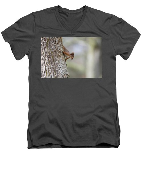 Red Squirrel Climbing Down A Tree Men's V-Neck T-Shirt