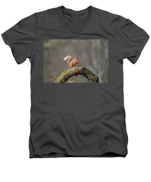 Red Squirrel Eating A Hazelnut Men's V-Neck T-Shirt
