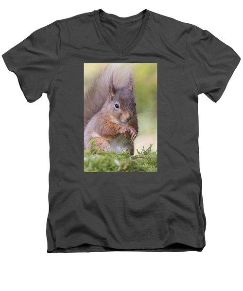 Red Squirrel - Scottish Highlands #1 Men's V-Neck T-Shirt