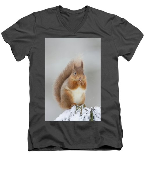 Red Squirrel Nibbling A Hazelnut In The Snow Men's V-Neck T-Shirt
