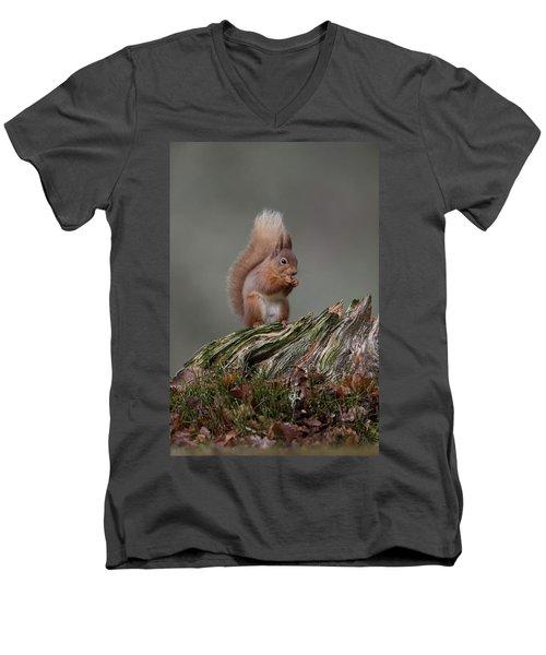 Red Squirrel Nibbling A Nut Men's V-Neck T-Shirt