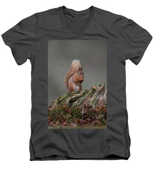 Red Squirrel Nibbling A Nut Men's V-Neck T-Shirt