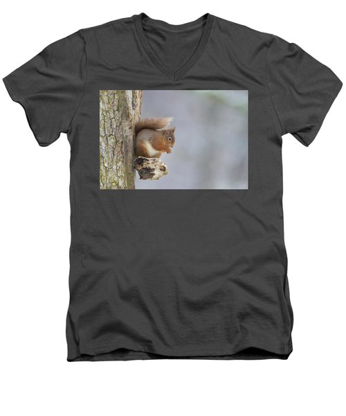Red Squirrel On Tree Fungus Men's V-Neck T-Shirt