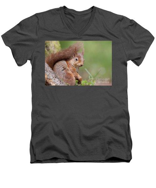 Red Squirrel - Scottish Highlands  #17 Men's V-Neck T-Shirt