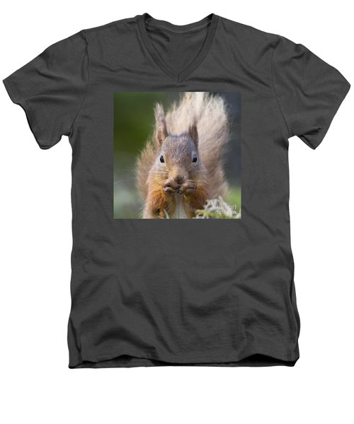 Red Squirrel - Scottish Highlands #28 Men's V-Neck T-Shirt
