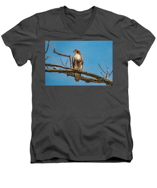 Red Tail Hawk Perched Men's V-Neck T-Shirt