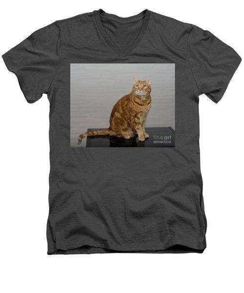 Red Tubby Cat Tabasco On Black Table Men's V-Neck T-Shirt