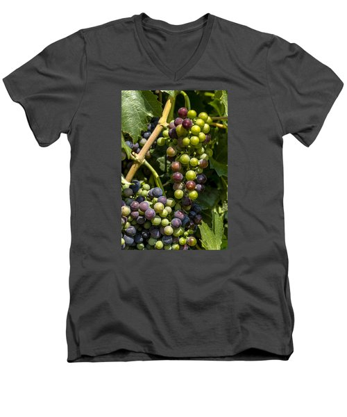 Red Wine Grape Colors In The Sun Men's V-Neck T-Shirt