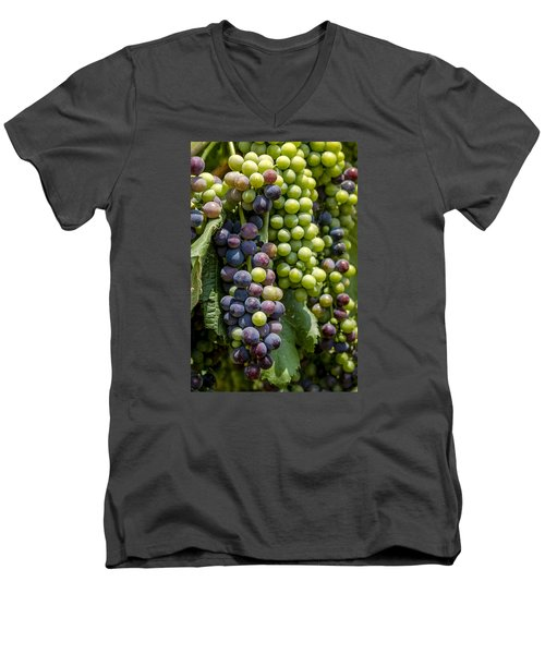 Red Wine Grapes In The Vineyard Men's V-Neck T-Shirt