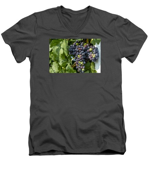 Red Wine Grapes On The Vine Men's V-Neck T-Shirt by Teri Virbickis