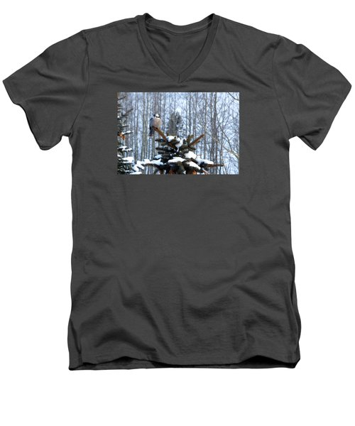 Refined Little Gray Jay In Colorado Men's V-Neck T-Shirt