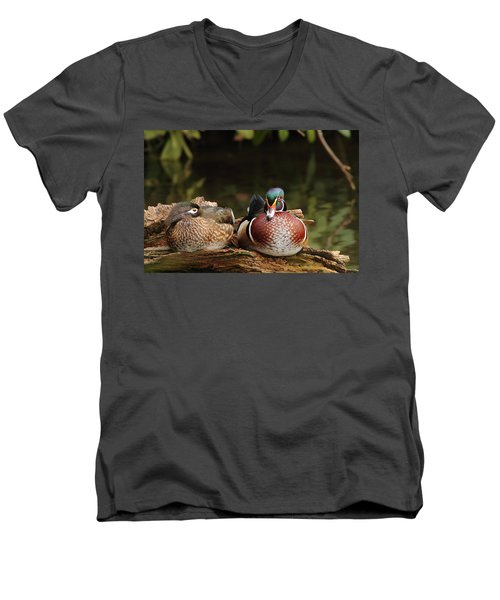 Resting Wood Ducks Men's V-Neck T-Shirt