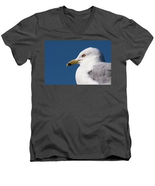 Ring-billed Gull Portrait Men's V-Neck T-Shirt