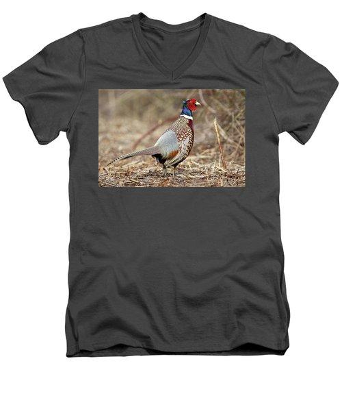 Ring-necked Pheasant Stony Brook New York Men's V-Neck T-Shirt