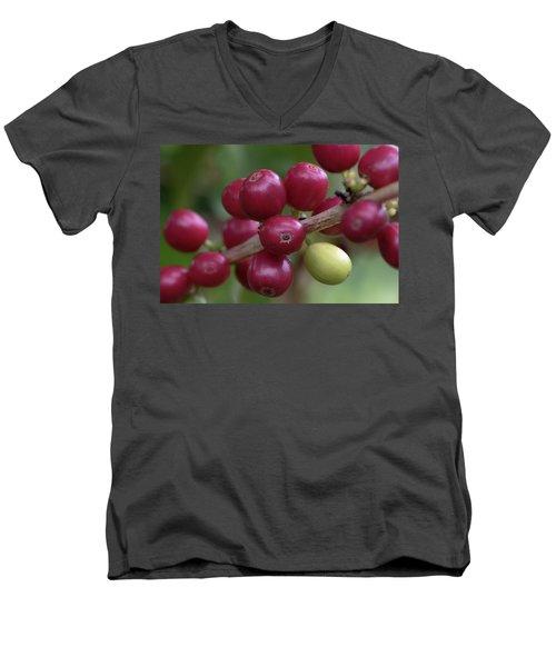 Ripe Kona Coffee Cherries Men's V-Neck T-Shirt