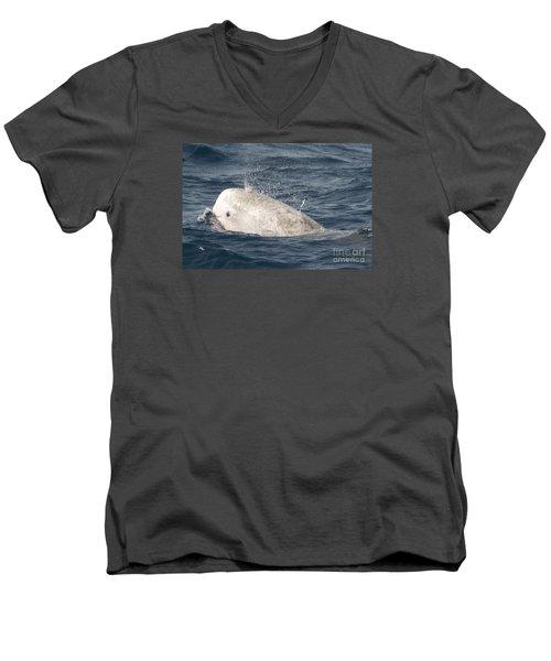 Risso Dolphin Men's V-Neck T-Shirt