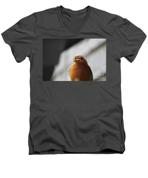 Robin Closeup Men's V-Neck T-Shirt