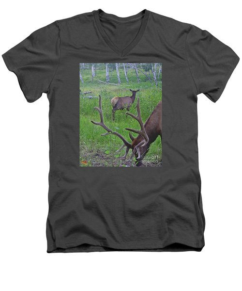 Rocky Mountain Bull Elk And Cow Men's V-Neck T-Shirt