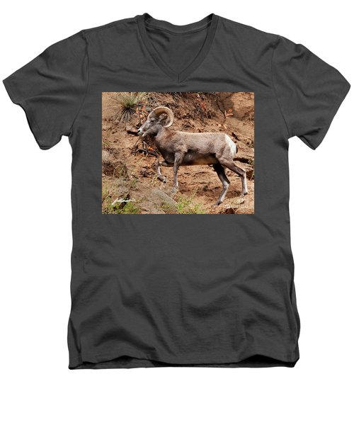 Rocky Mt. Big Horn Sheep Men's V-Neck T-Shirt