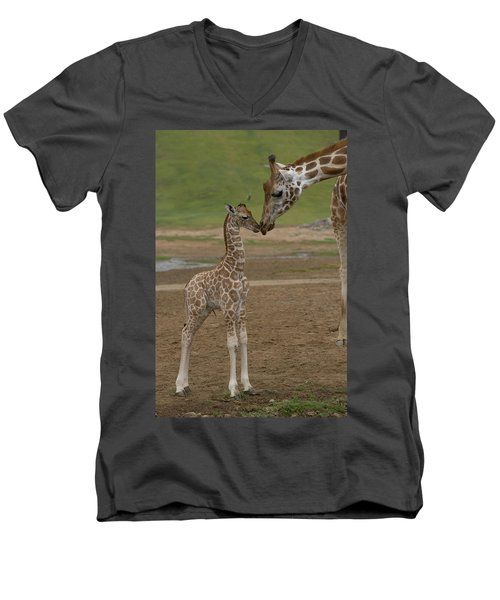 Rothschild Giraffe Giraffa Men's V-Neck T-Shirt