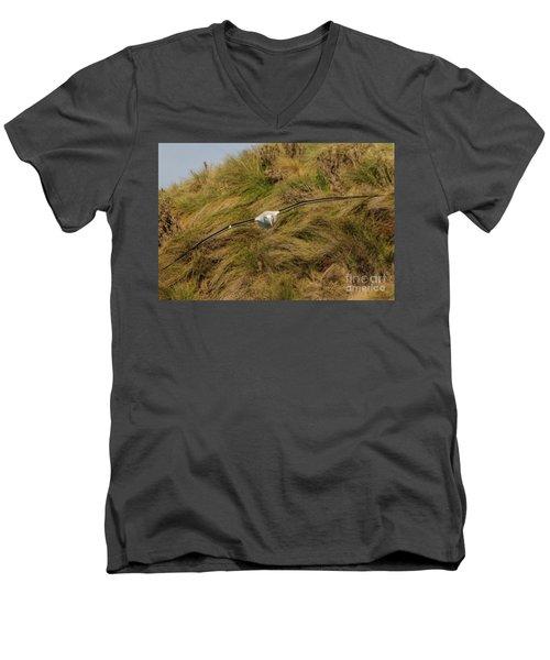 Royal Albatross 2 Men's V-Neck T-Shirt by Werner Padarin