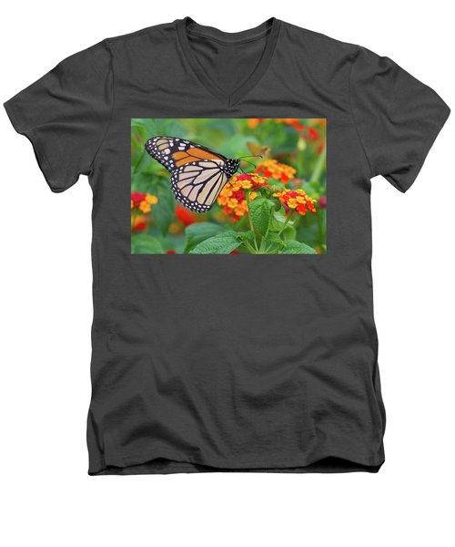 Royal Butterfly Men's V-Neck T-Shirt