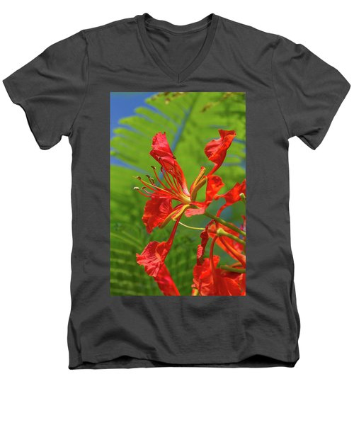 Royal Poinciana Flower Men's V-Neck T-Shirt