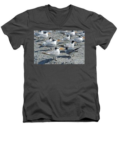 Royal Terns Men's V-Neck T-Shirt by Paul Mashburn