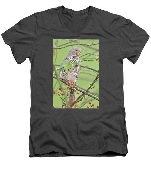 Sage Thrasher Men's V-Neck T-Shirt by Alan Lenk