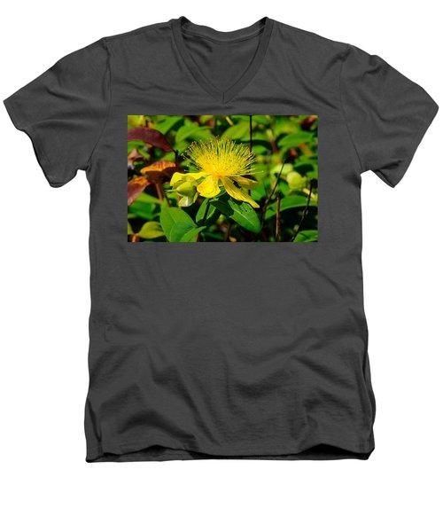 Saint John's Wort Blossom Men's V-Neck T-Shirt