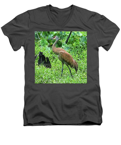 Sandhill Crane At Sandy Ridge Reservation Men's V-Neck T-Shirt
