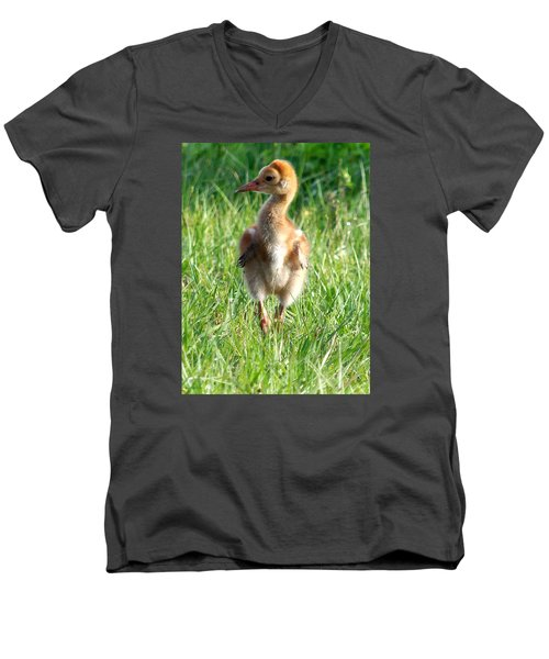 Sandhill Crane Chick 085  Men's V-Neck T-Shirt