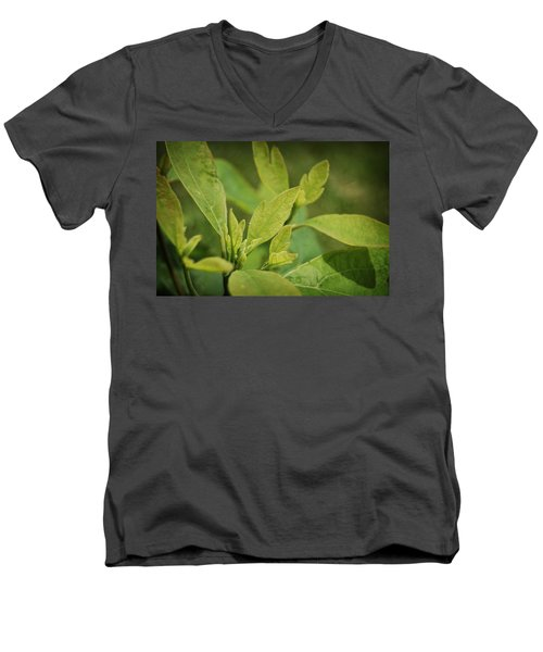 Sassafras Tree Men's V-Neck T-Shirt