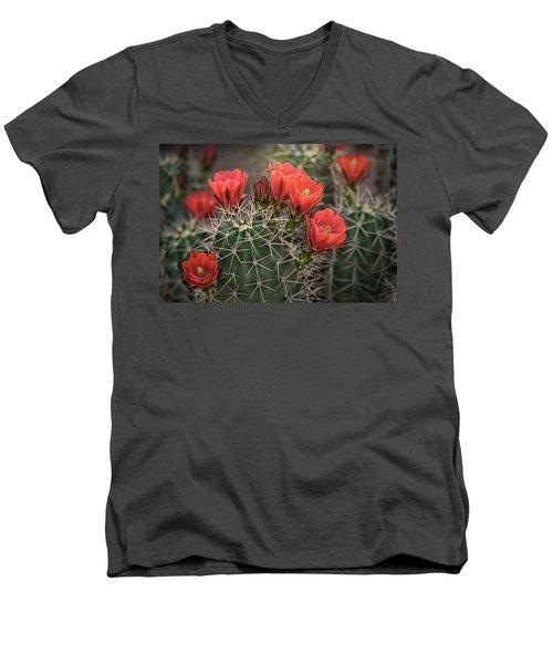 Men's V-Neck T-Shirt featuring the photograph Scarlet Hedgehog Cactus  by Saija Lehtonen