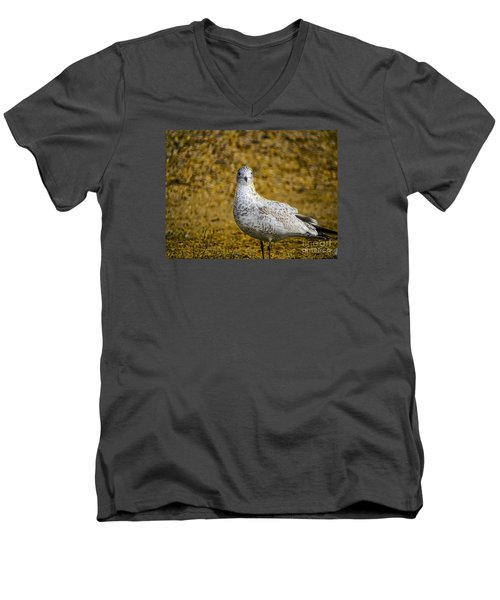 Men's V-Neck T-Shirt featuring the photograph Seagull Family by Melissa Messick