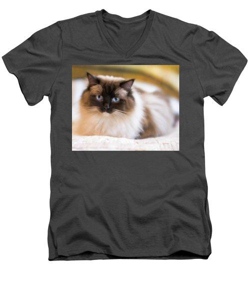 Seal Point Bicolor Ragdoll Cat Men's V-Neck T-Shirt