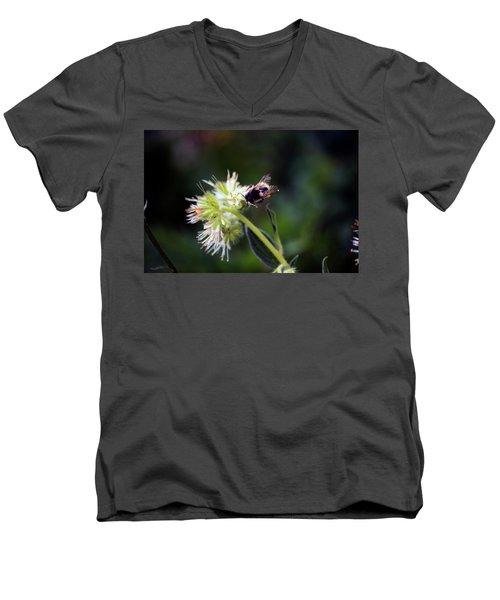 Searching For Pollen Men's V-Neck T-Shirt
