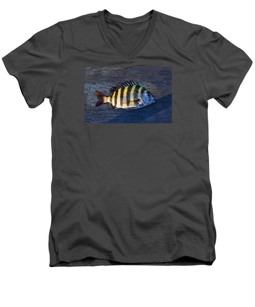 Men's V-Neck T-Shirt featuring the photograph Sheepshead Fish by Laura Fasulo