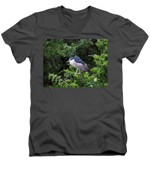 Shore Bird Roosting In A Tree Men's V-Neck T-Shirt