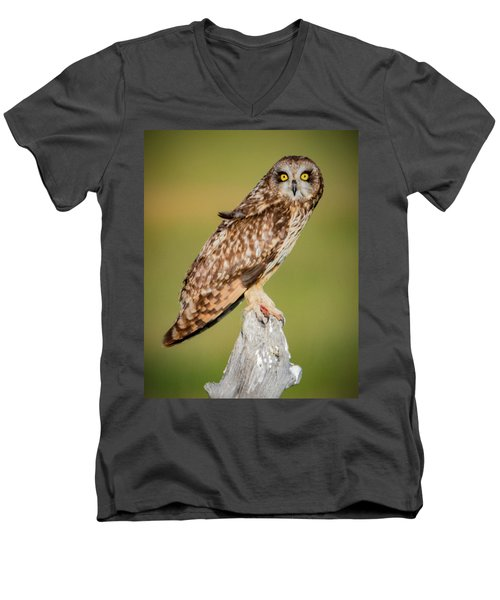 Short Eared Owl Men's V-Neck T-Shirt