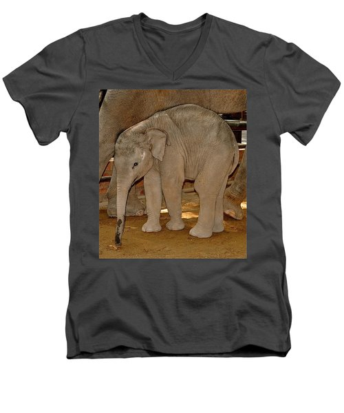 Shy Baby Elephant Men's V-Neck T-Shirt